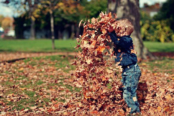 kid in leaves for web leaf pickup